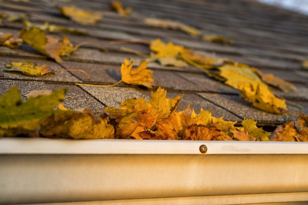 Leaves on a roof in colder weather/fall